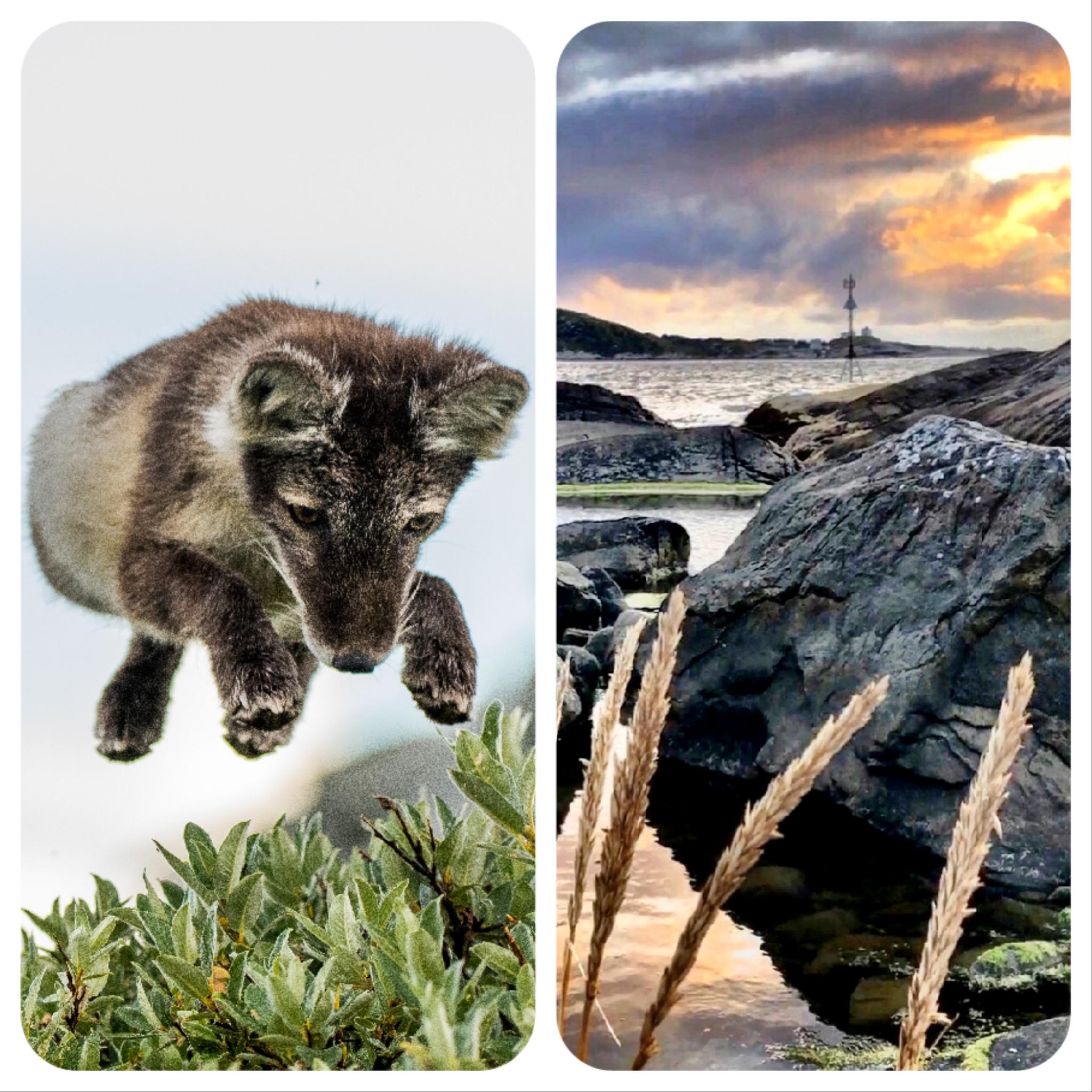Vinnerbilder fra Nordic photodesign