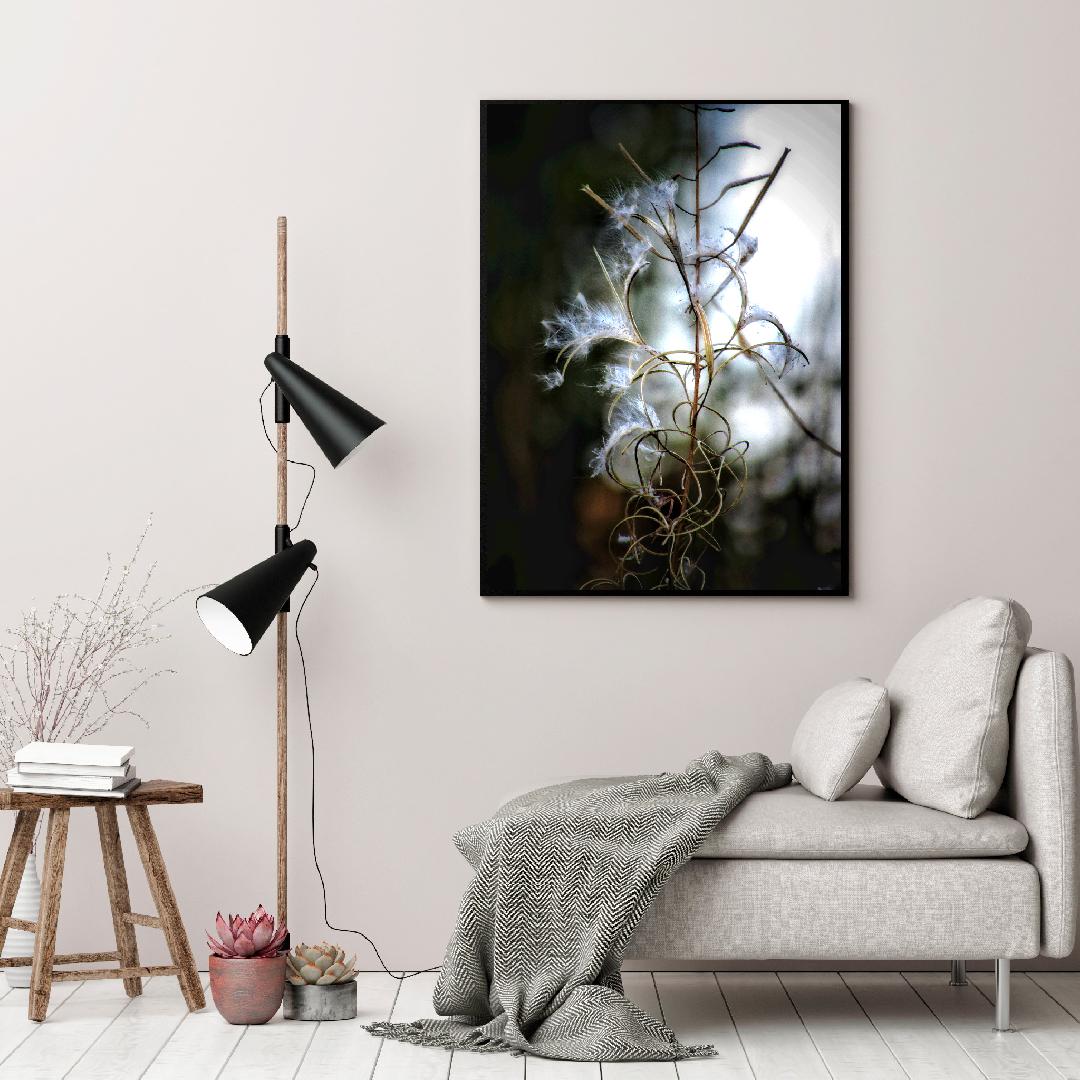 Vinner bilder fra Nordic photodesign