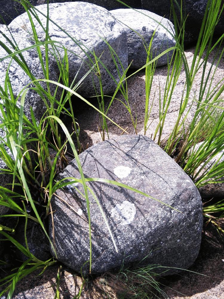 Steiner og gress- Nordic photodesign