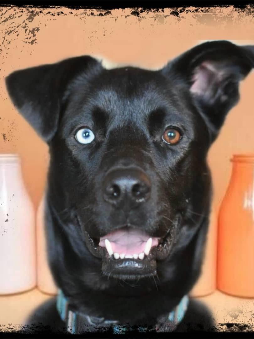 Hund med baakgrunn- Nordic photodesign
