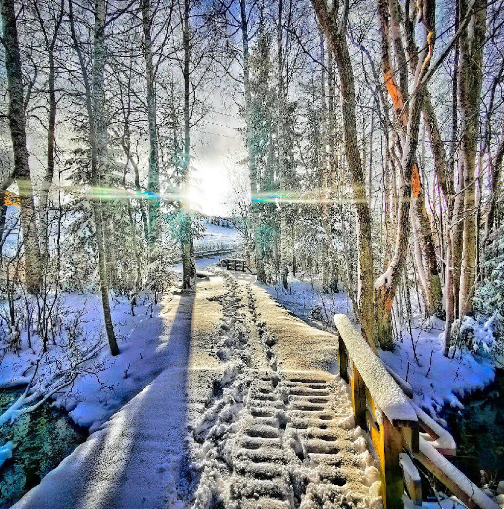 Vinnerbildet vinter Wenche Nordby